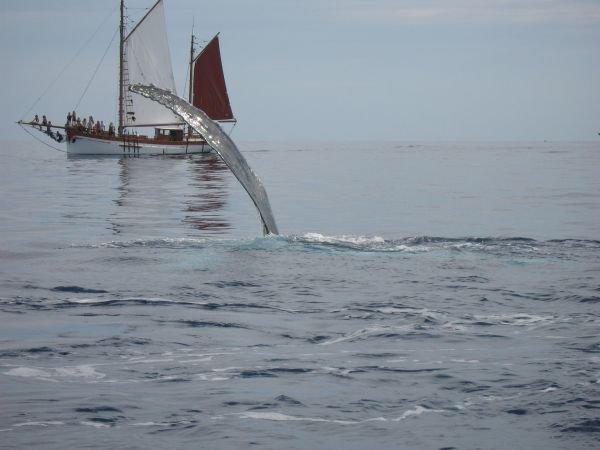 Photo de Pascal PRADEL - 14/09/2008 - Ile de La Réunion